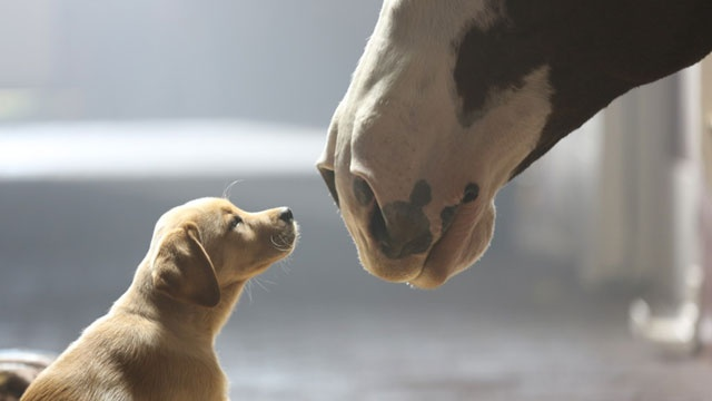 Top 2014 Super Bowl ads and what made them Super